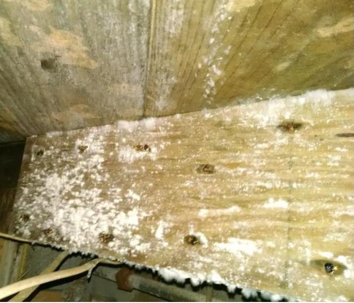 Mold Remediation Mold in your Home or Business - What to Do and Not to Do