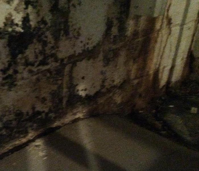 Mold Remediation Leave Mold Remediation to the SERVPRO Professionals